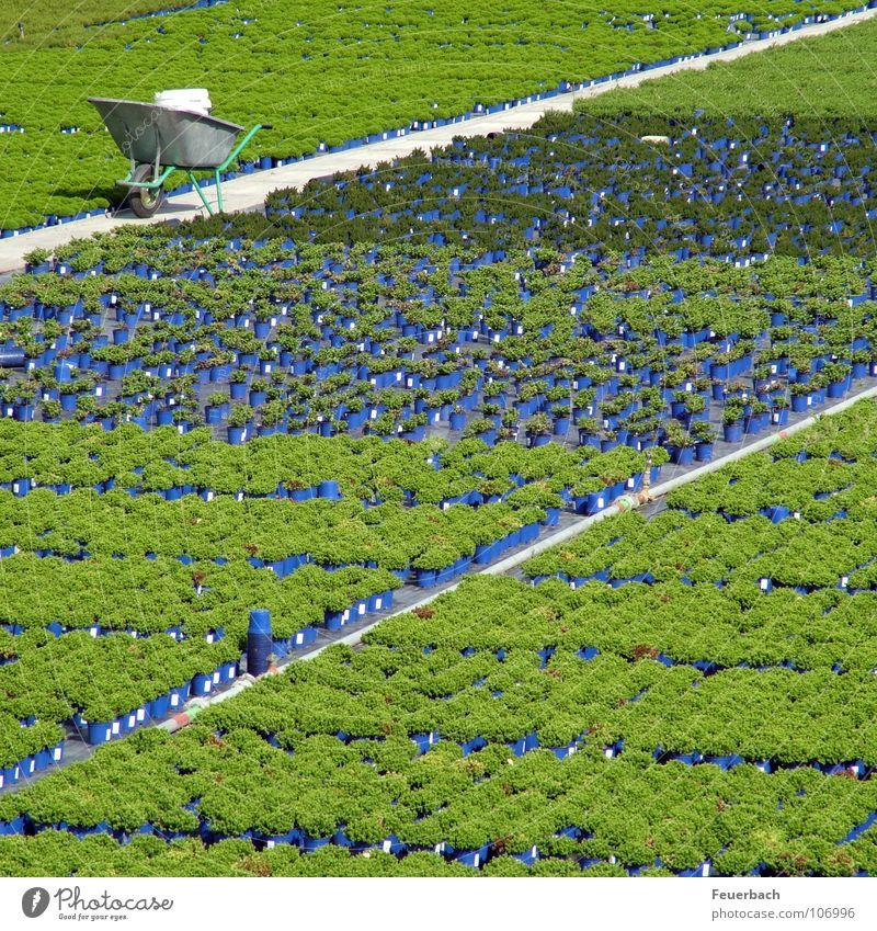 Kappeshamm 1 Blume grün blau Pflanze Farbe Arbeit & Erwerbstätigkeit Herbst Garten Linie Ordnung Pause Landwirtschaft Ackerbau Düsseldorf Topf Gartenbau