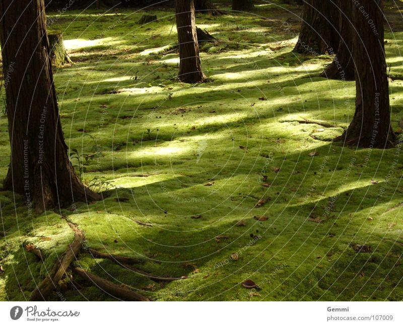 mossy forest Natur Farbe Einsamkeit Landschaft ruhig Gefühle Garten Park weich berühren geheimnisvoll Gelassenheit sanft Japan Gedanke wahrnehmen