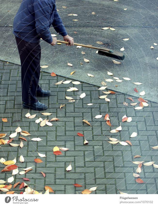 Straßenfeger Natur Pflanze Blatt Landschaft Tier Herbst Klima Reinigen Bürgersteig Straßenbelag Herbstlaub herbstlich Parkplatz Herbstfärbung Herbstbeginn Besen