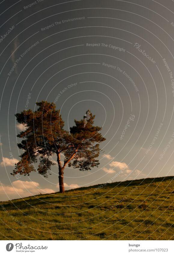 Hören Baum Wolken schlechtes Wetter dunkel bedrohlich Dämmerung Nacht Horizont Sonnenuntergang träumen Traumwelt Einsamkeit harmonisch Farbenspiel Romantik