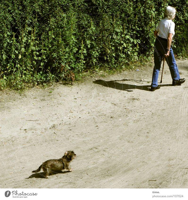 Tabellenletzter Frau Hund alt Erwachsene Sand Park laufen Seil Sträucher Spaziergang einzeln Vertrauen Geruch Säugetier rückwärts Hecke