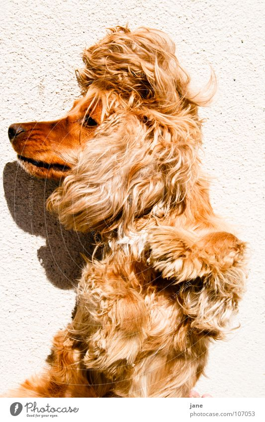 Diva Hund Sonne Sommer Tier Erholung schlafen Körperhaltung gemütlich Säugetier faulenzen