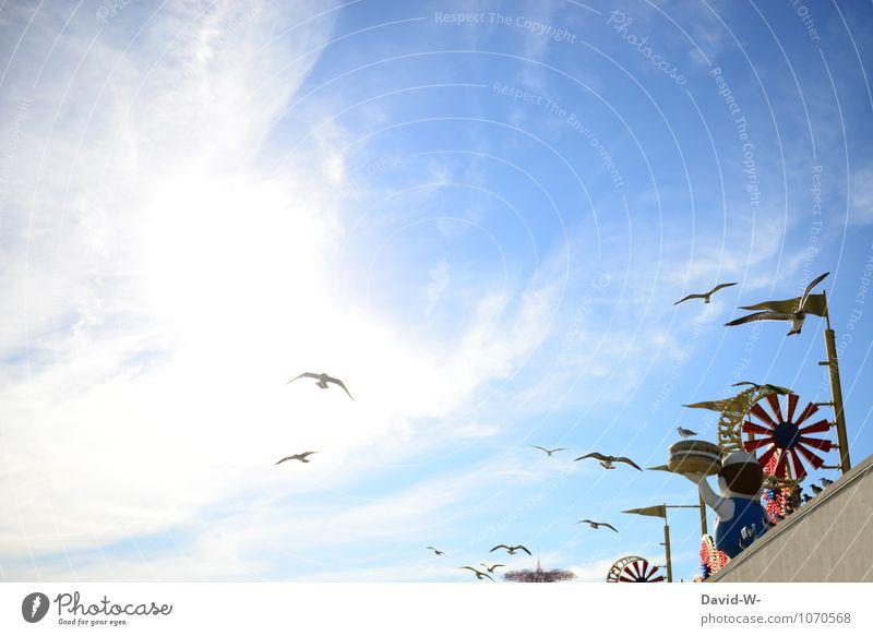 Flugverkehr Ferien & Urlaub & Reisen Sommer Sonne Erholung ruhig Wolken Tier Leben Essen Freiheit Vogel Party Zufriedenheit Luftverkehr Tourismus Ausflug