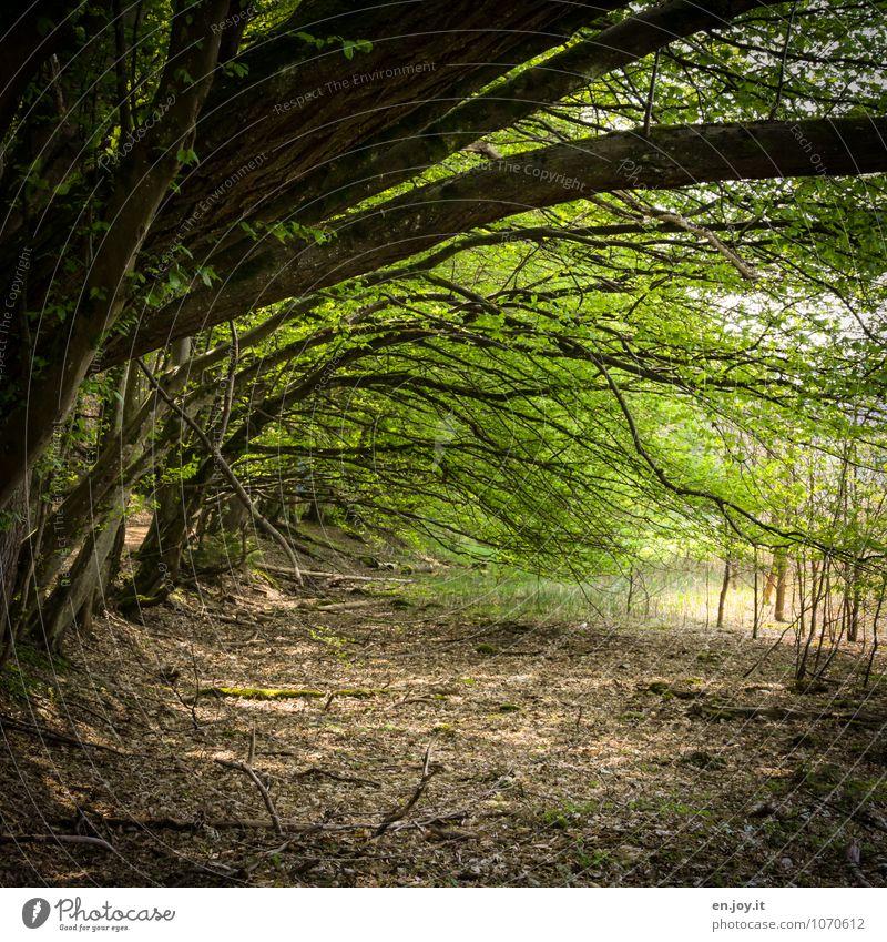 Tunnelblick Umwelt Natur Landschaft Pflanze Frühling Sommer Baum Blatt Ast Wald Wachstum grün Idylle Klima Umweltschutz Vertrauen Wege & Pfade Felsbogen
