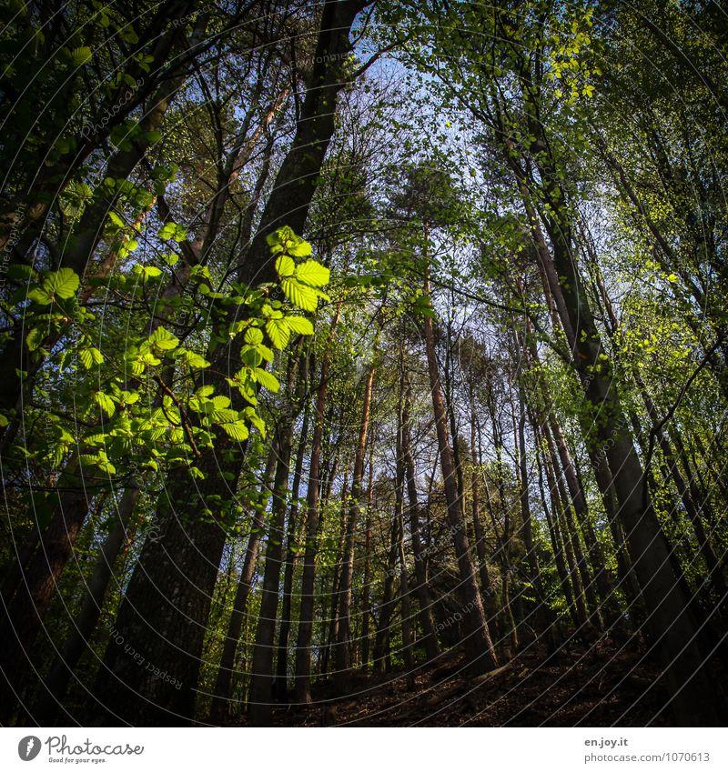 noch n'bisschn mehr grün Leben ruhig Umwelt Natur Landschaft Pflanze Frühling Sommer Schönes Wetter Baum Blatt Wald Wachstum frisch Lebensfreude