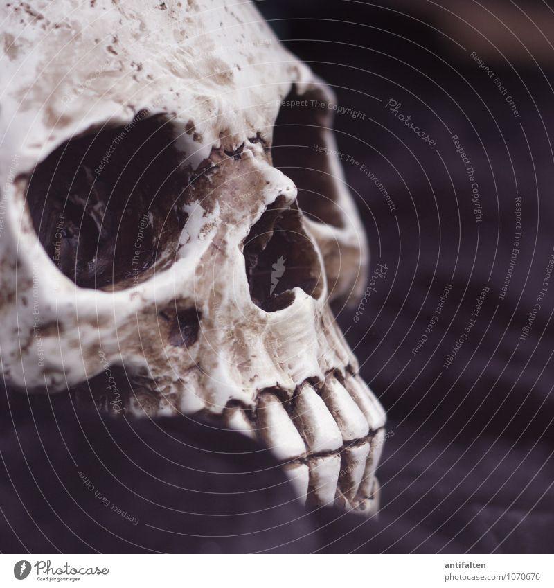 Freitag der 13te Körper Kopf Gesicht Zähne Kunst Ausstellung Kunstwerk Skulptur Zeichen Schädel Skelett liegen außergewöhnlich bedrohlich dunkel verrückt