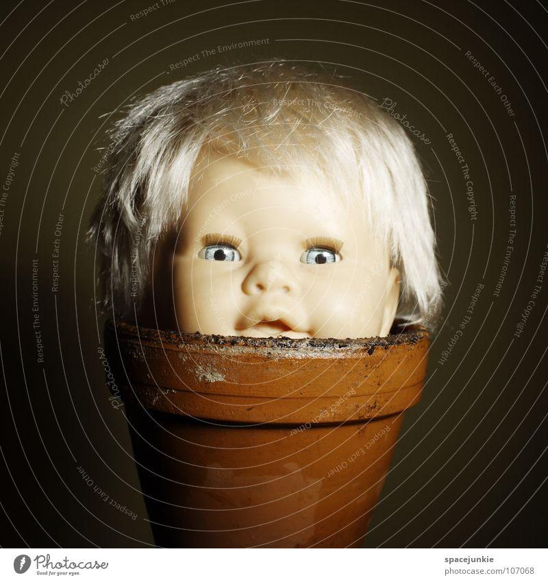 Blümchen Spielzeug bedrohlich beängstigend blond Chucky gruselig Horrorfilm böse süß niedlich skurril Moor Reifezeit Wachstum aufwachen keimen sprießen feucht