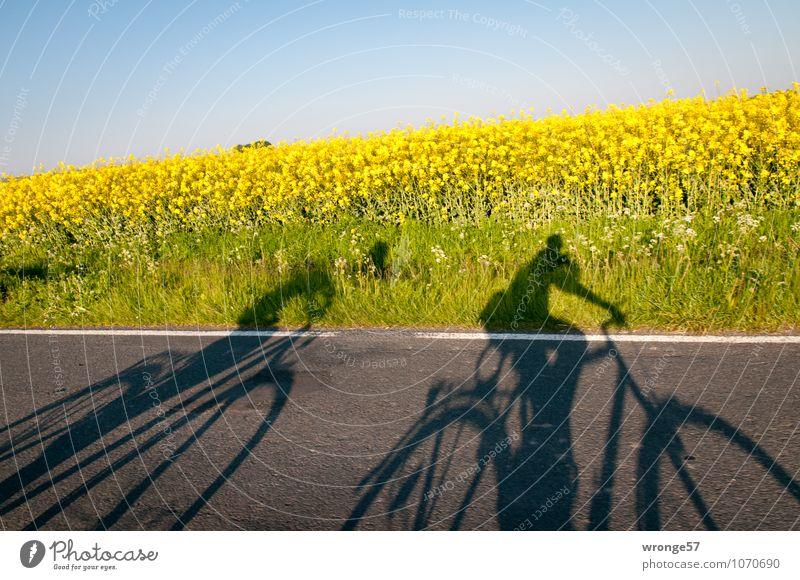 Geisterfahrer Mensch Himmel Natur Pflanze Sommer Straße Blüte Paar Feld Fahrrad Ausflug Schönes Wetter Fahrradfahren fahren Fahrradtour Wolkenloser Himmel
