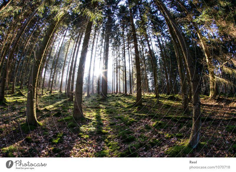 100 | Lange Schatten Ausflug Natur Landschaft Pflanze Urelemente Erde Sonne Sonnenaufgang Sonnenuntergang Sonnenlicht Frühling Winter Schönes Wetter Baum Moos
