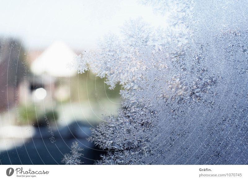 Good bye Winter Umwelt Natur Wasser Frühling Eis Frost Fenster Fensterscheibe Kristalle frieren blau Vorfreude Sehnsucht Idylle kalt Wandel & Veränderung
