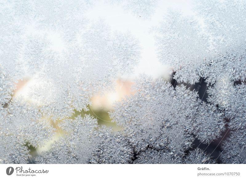 Väterchen Frost Luft Wasser Sonnenlicht Winter Eis Fenster Fensterscheibe Glas Kristalle frieren kalt Kitsch weiß Romantik Klima Nostalgie rein Umwelt