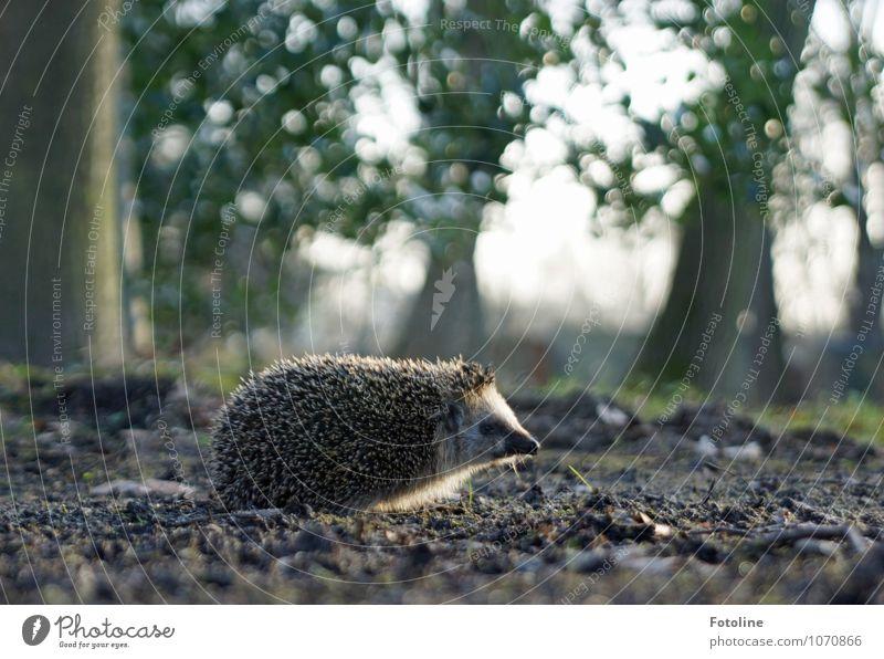 Auf gehts! Natur Pflanze grün Baum Tier Wald Umwelt Frühling natürlich grau klein braun hell Sand Park Erde