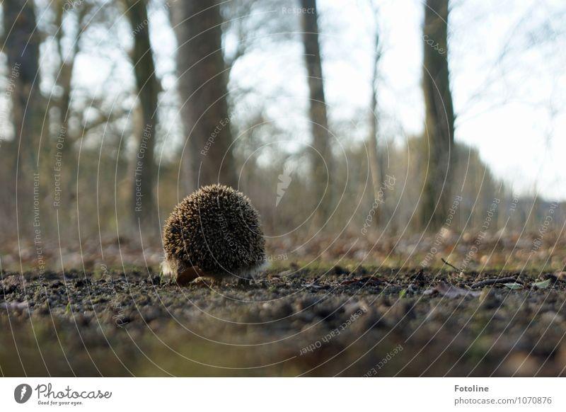 900 Stacheln Natur Pflanze Baum Tier Umwelt Frühling natürlich klein braun hell Sand Park Feld Erde Wildtier laufen