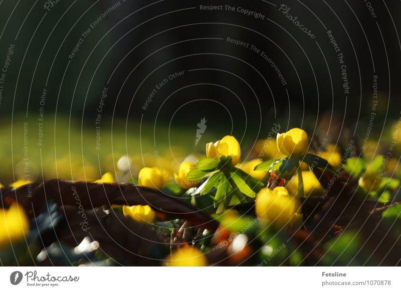 Goldgelb Natur Pflanze schön grün Blume Landschaft Umwelt Blüte Frühling natürlich Garten braun hell Park nah