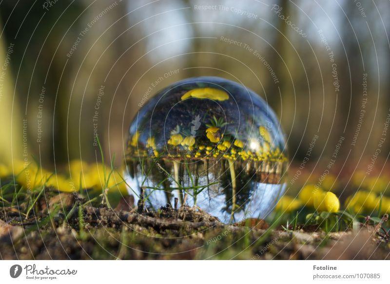 Ich sage voraus: Es wird Frühling Umwelt Natur Landschaft Pflanze Urelemente Erde Sand Schönes Wetter Blume Blüte Garten Park hell nah natürlich braun gelb grün