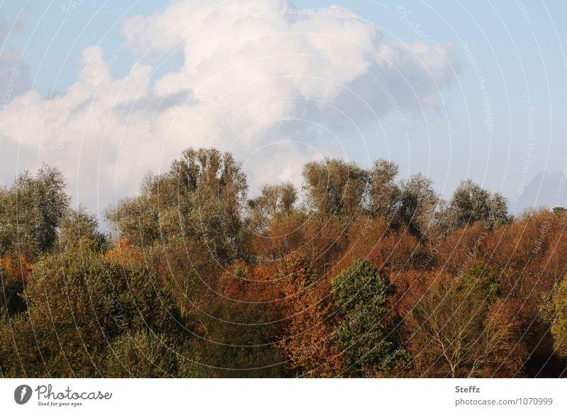Herbst in England englische Landschaft englische Provinz malerisch poetisch nordische Romantik November herbstliche Impression Herbstlandschaft