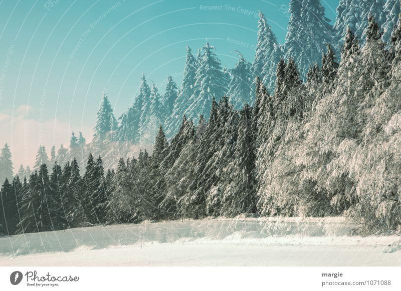 Doppelter Winterwald II Natur Ferien & Urlaub & Reisen grün weiß Baum Erholung ruhig Wald Schnee Gesundheit Schneefall träumen Eis Wetter Freizeit & Hobby