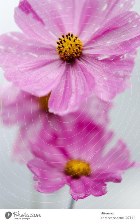Three sad sisters Himmel gelb Herbst rosa Trauer Verzweiflung Schmuckkörbchen
