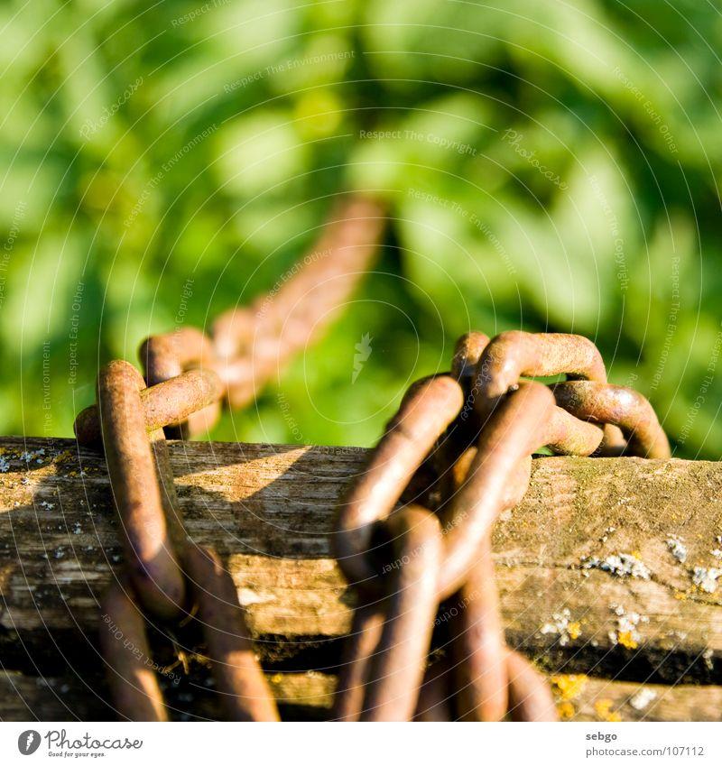 Die Kette in's Nichts grün Wiese Gras Holz hoch Rasen Unendlichkeit tief Handwerk Kette Eisen verbinden Pfosten Gliedmaßen angekettet