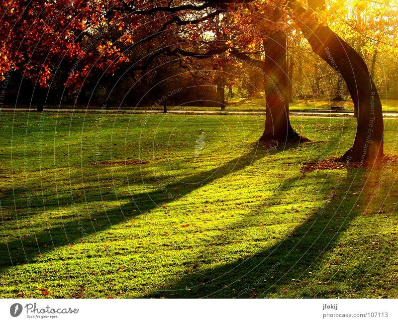 Abendstimmung Baum Park grün Wiese Gras Wachstum Herbst Schatten Gegenlicht Sonnenuntergang Nachmittag Blatt getrimmt Garten Himmelskörper & Weltall Lichtfleck