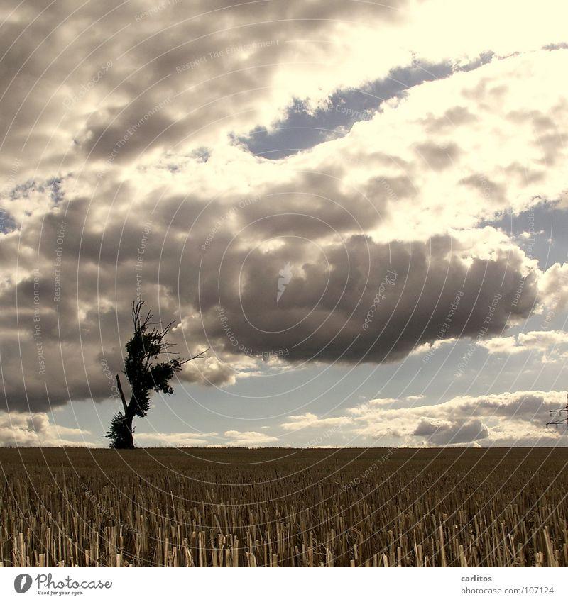 Am Ende der Welt Apokalypse Baum Farblosigkeit Gegenlicht Stoppelfeld Herbst Wetter Endzeitstimmung Sonne Silhouette halber Bonus-Strommast