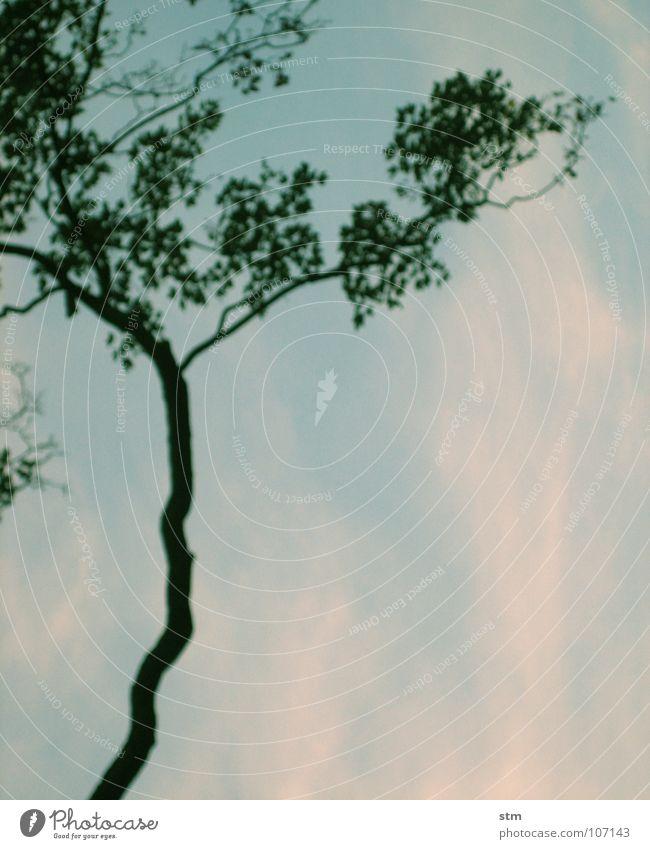 grünblau 01 Baum Blatt Wolken Zen ruhig filigran Unschärfe träumen Denken verschwimmen Japan schön Ast Himmel Verkehrswege recken nachdenken Blick