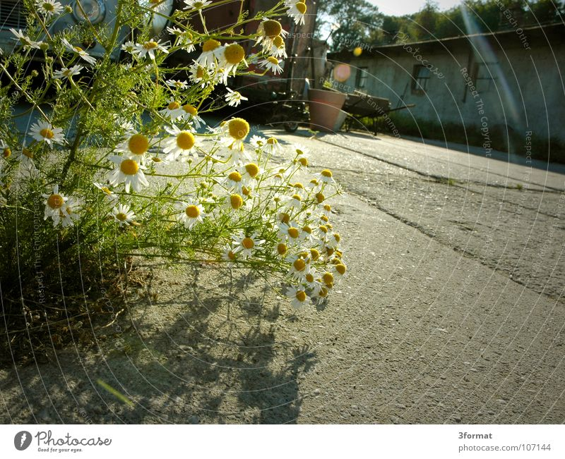 hinterhof alt schön Blume Einsamkeit Haus Straße dunkel Traurigkeit hell Deutschland Platz Europa gut Sträucher Trauer Vergänglichkeit