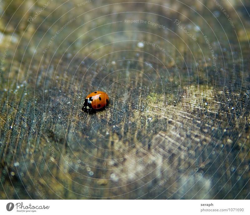 Marienkäfer Käfer Insekt Tier Symbole & Metaphern Symbolismus luck Neujahrsfest sylvester Holz krabbeln moos verwittert Biologie natürlich klein niedlich Punkt