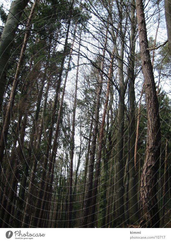 Baumstämme Baumkrone Baumstamm Wald