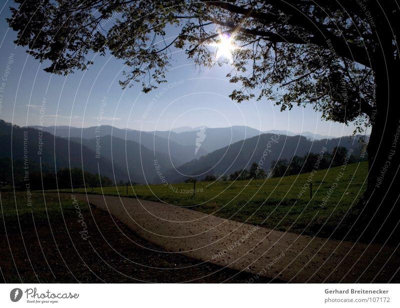 Guten Abend, Land! Hügel Abendland Wiese Feld Ackerbau Vieh Baum untergehen Sonnenuntergang dunkel trüb Physik Sommer Frühling wandern Panorama (Aussicht)