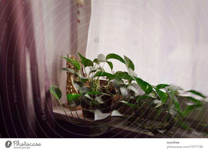fenster Häusliches Leben Wohnung Innenarchitektur Dekoration & Verzierung dunkel Stimmung Traurigkeit Fenster Fensterbrett Zimmerpflanze Vorhang Farbfoto