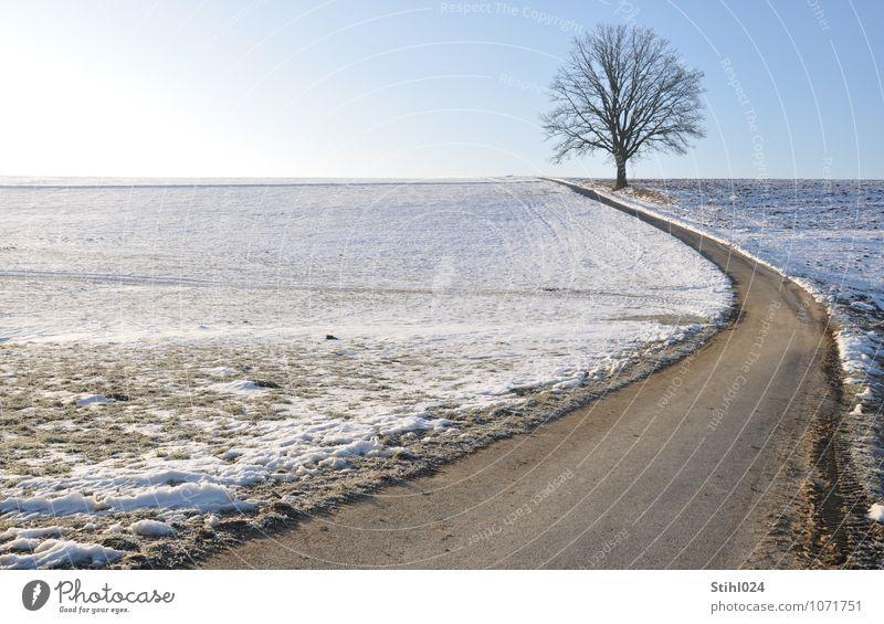 Lieblingsbaum Ferne Freiheit Schnee Landschaft Wolkenloser Himmel Horizont Sonnenlicht Winter Schönes Wetter Ferien & Urlaub & Reisen natürlich blau grau weiß