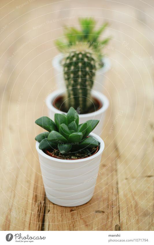 bestechendes Trio Häusliches Leben Wohnung Natur Pflanze grün Kaktus Sukkulenten 3 Holztisch Dekoration & Verzierung Farbfoto Innenaufnahme Detailaufnahme Tag