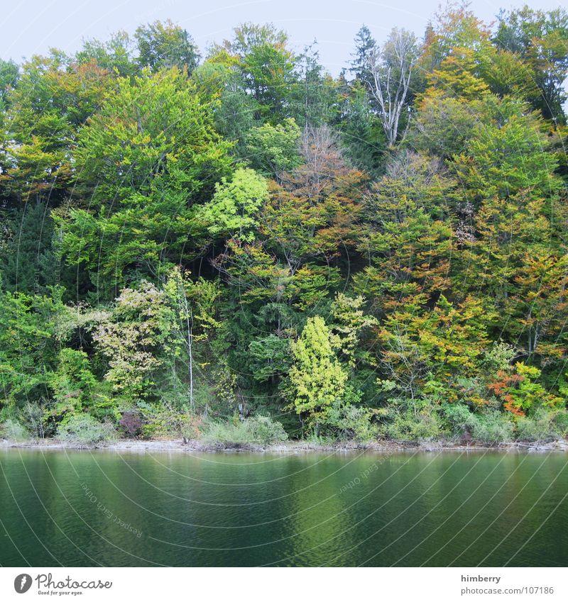 autumn waterside Herbst See Österreich Wildnis Baum Blatt Wald Gebirgssee mondsee Natur Wasser Landschaft Küste