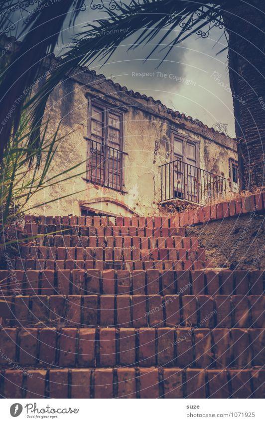 Stuf' um Stuf' Baum Ruine Bauwerk Gebäude Treppe Fassade alt authentisch dreckig dunkel fantastisch kaputt trist trocken braun Stimmung Einsamkeit stagnierend