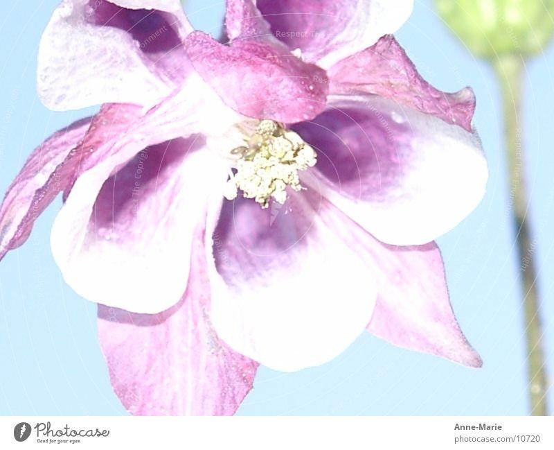Lichteffekt Blume Natur Blume violett