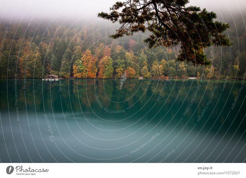 Hüttengaudi | am Alpsee Natur Ferien & Urlaub & Reisen Pflanze grün Erholung Einsamkeit Blatt Landschaft ruhig Wald Umwelt Traurigkeit Herbst See Nebel