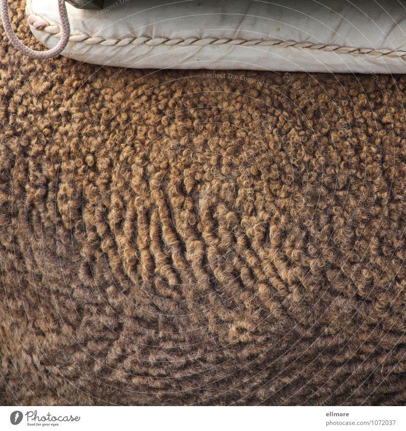 onduliert Tier Nutztier Fell Kamel 1 Kissen Schnur weich braun rosa weiß ruhig Farbfoto Gedeckte Farben Außenaufnahme Nahaufnahme Detailaufnahme Muster