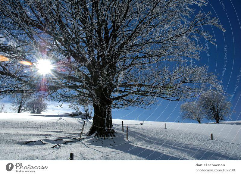 Weihnachtskarte 2 Himmel Natur Ferien & Urlaub & Reisen blau weiß Baum Sonne Einsamkeit Winter kalt Schnee Hintergrundbild Deutschland Horizont Freizeit & Hobby