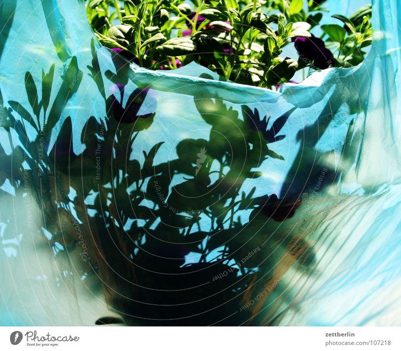 Pflanze Blume Blumentopf Grünpflanze Balkonpflanze Topfpflanze grün Blüte Blatt Verpackung passend Jubiläum Freudenspender Feiertag obskur Blühend verpackt