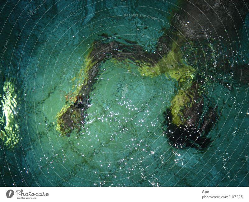 Unterwasser zyan tauchen Schwimmbad Mann unklar verkehrt gedreht auf dem Kopf Oberkörper Spielen Wasser Unschärfe Fliesen u. Kacheln Vogelperspektive