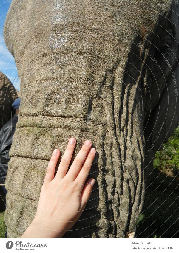 Touching Elephant Mensch Natur Ferien & Urlaub & Reisen Sonne Hand Tier Ferne Liebe Spielen Glück Freiheit außergewöhnlich träumen wild Wildtier Tourismus