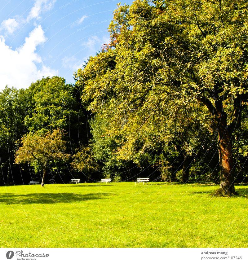 Park Bank Baum Natur Wolken Himmel grün Erholung ruhig Wiese Gras Herbst tree clouds trees sky blau blue Aktien