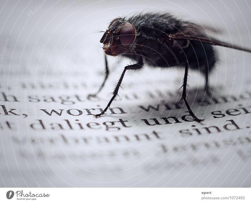Herr Fliege und die Propheten Buch Insekt 1 Tier Schriftzeichen krabbeln lesen warten nah Kultur stagnierend Vergänglichkeit Bibel Text abstoßend bedrohlich