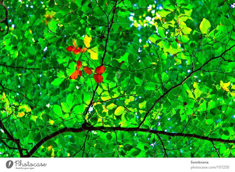 Autumn In Spring Natur Baum grün Blatt gelb Wald Herbst orange Dach Ast Vergänglichkeit Mitte filigran durchscheinend