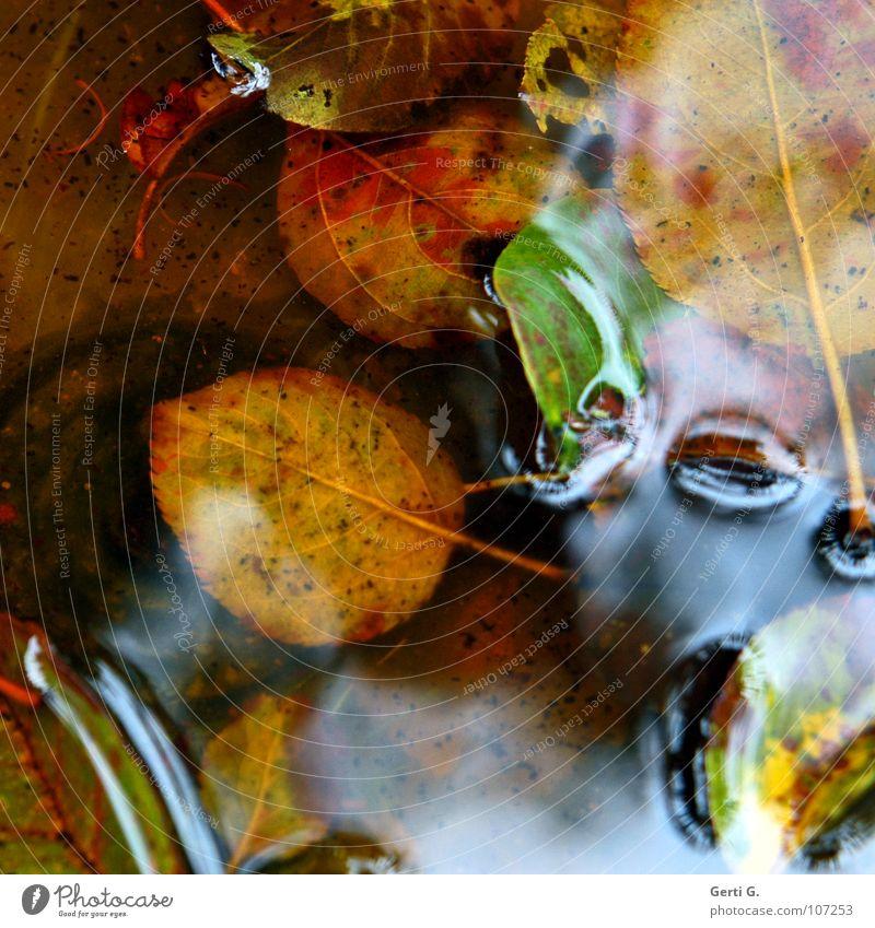 Wasserbett Herbst mehrfarbig Blatt nass Pfütze Herbstfärbung Jahreszeiten schlechtes Wetter grün Wasserfarbe Wasserlache durcheinander glänzend Ölfilm