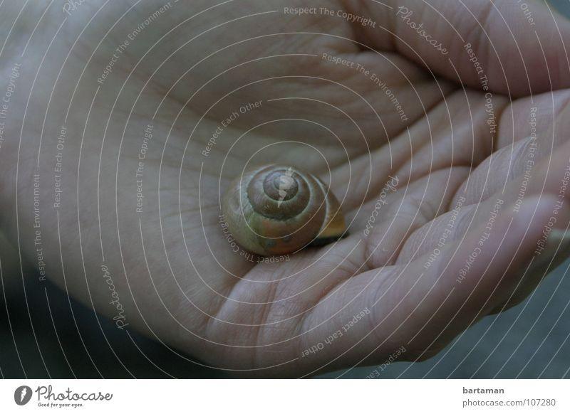 Na du Schnecke Hand Tier Haus liegen Finger leer Mitte langsam Schneckenhaus Domizil Handfläche