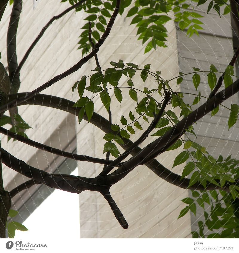 So Natural Natur Baum Blatt Holz Beton modern natürlich Mitte Material Neubau