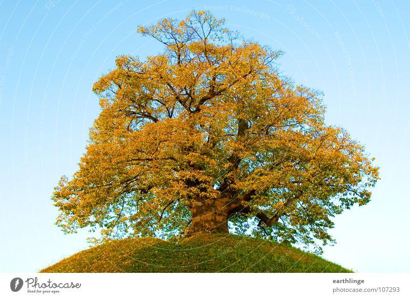 Die Dorfälteste 3 alt Himmel grün Einsamkeit gelb Herbst Berge u. Gebirge orange Ast Vergänglichkeit Hügel Ruhestand Baum Digitalfotografie Herbstlaub erhaben