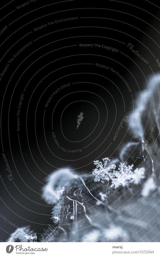Ja, die Kleinen... Natur Winter dunkel kalt Schnee klein außergewöhnlich Eis authentisch fantastisch einfach Frost dünn frieren Symmetrie Kristalle